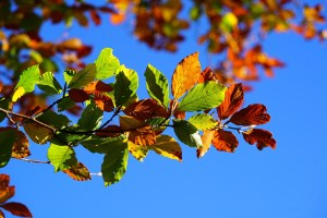 Why Fall Tree Care is Crucial for Your Landscape in September