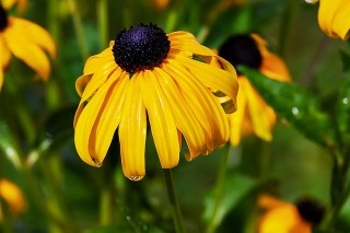 When to Plant Flowers in Maryland