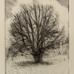 Tree, 2011, etching, 5x7in (13x18cm)