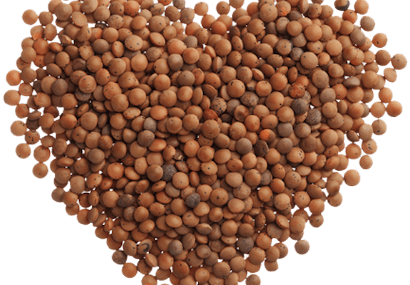 Desert Storm, Or: How I Learned to Stop Worrying and Love the Lentil