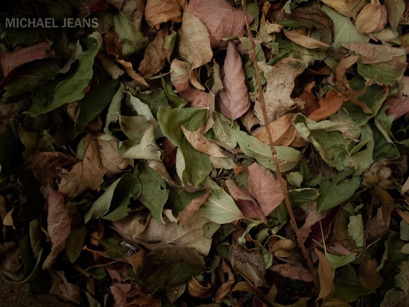 Autumn leaves Leamington New Zealand