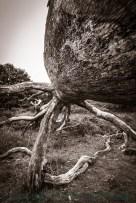 Der gespaltene Baum bietet etliche spannende Motive. (Foto: Michael Kaub)