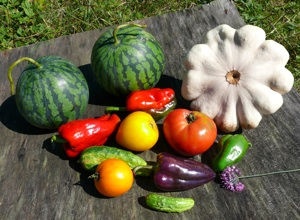 7 Vegetables to Grow in Your BackYard Garden