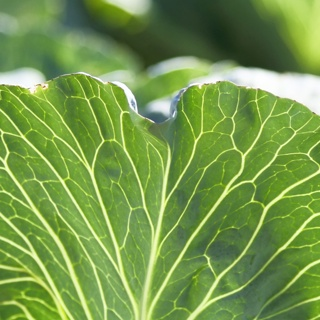 Adding Green Leafy Veggies to Your Elixirs