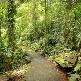 A Rainforest Walk