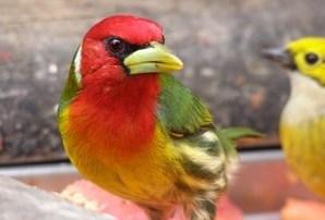 Costa Rican Tropical Bird
