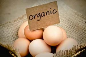 Eggs That are Organic