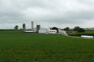 Large Dairy Farm