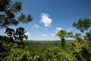 Belize Forest
