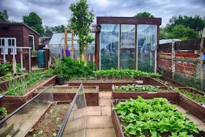 Small Garden Plot