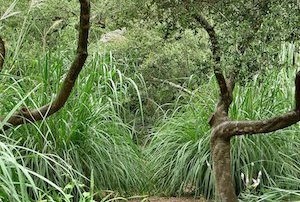 Tropical Bushes