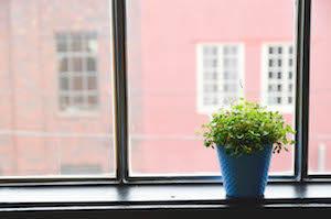 Window & Plant