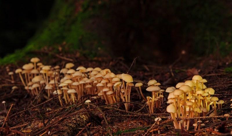 Mushrooms Forest Fungus Toadstool