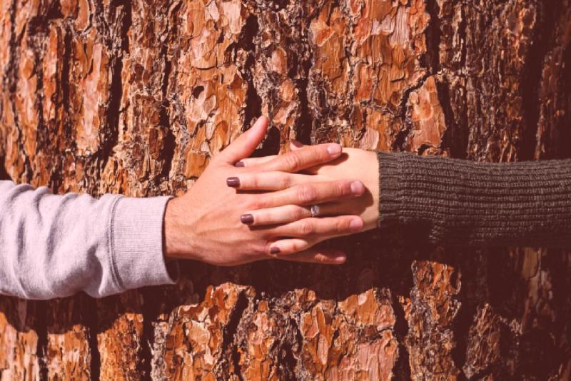 What if everyone was a tree-hugger?
