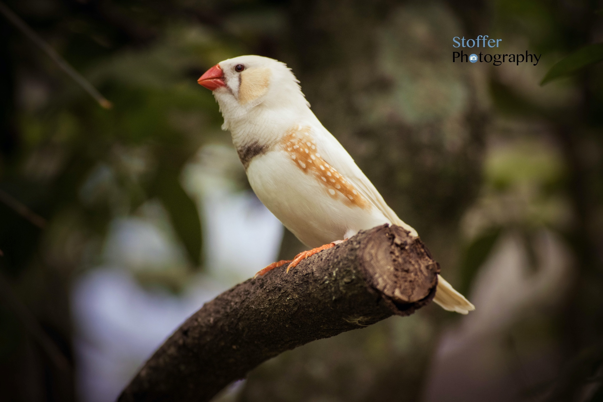 Bird Relaxing