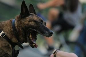 dog bite homeowners insurance