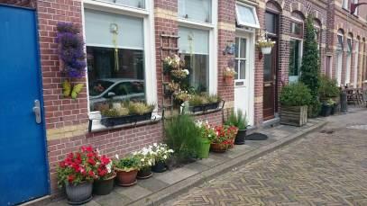 Muitas flores nas casas