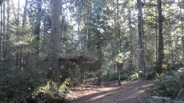 Howe Dog Park, Port Orchard Washington