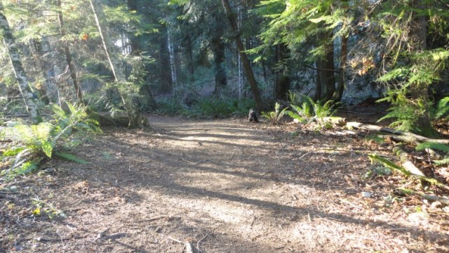 Port Orchard, Washington, Howe Dog Park, Poop, shih-poo