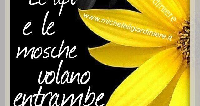 La Frase Della Settimana Michele Il Giardiniere