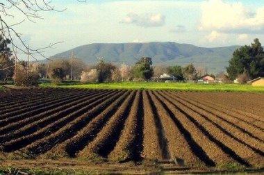 Agricoltura sociale, educazione alimentare, ambientale in aziende agricole.