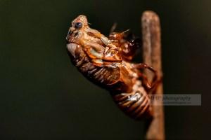 Galerie 18 : Insectes et Batraciens