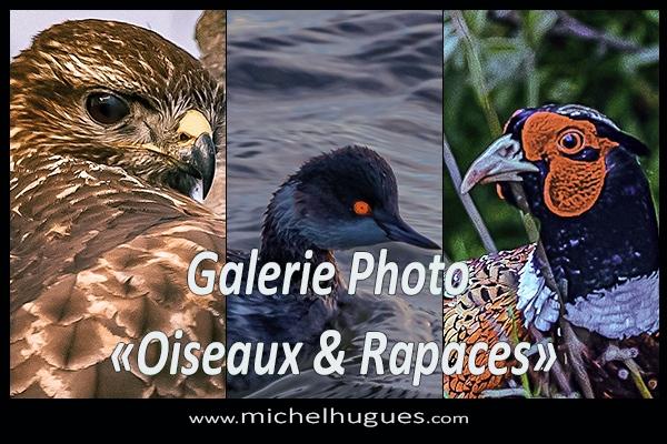 """Michel HUGUES : Galerie Photo N°17 : """"Oiseaux et Rapaces"""""""