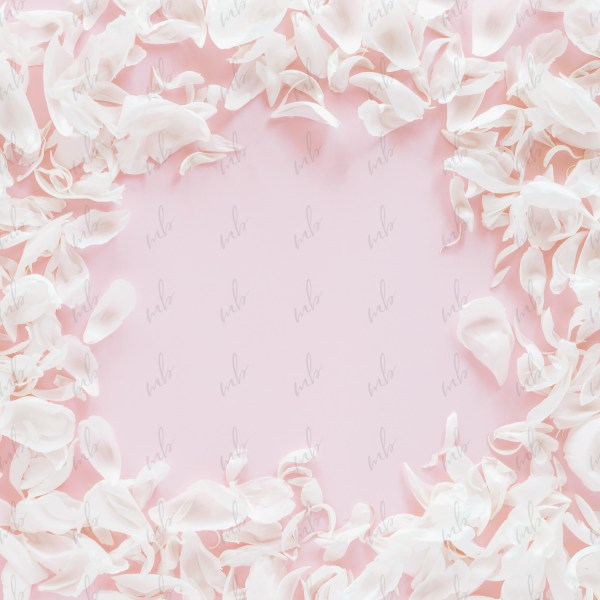 Light Pink styled stock photo by Savvy Stock