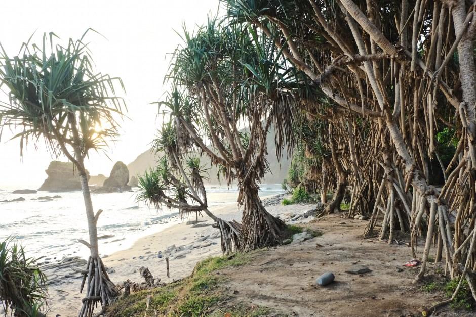 Plants in Papuma Beach