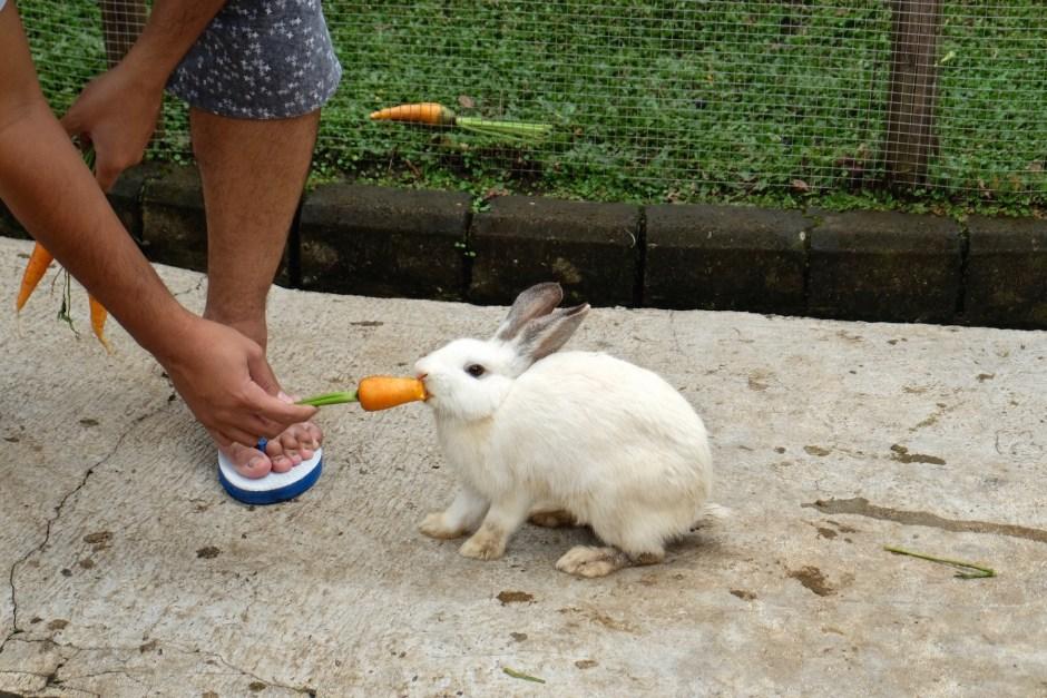 Feeding Rabbit