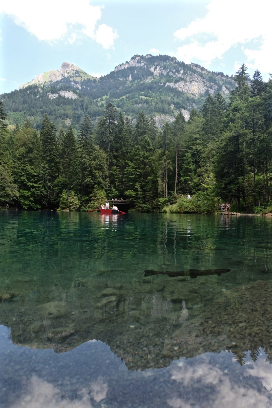 Big Trout in Blausee