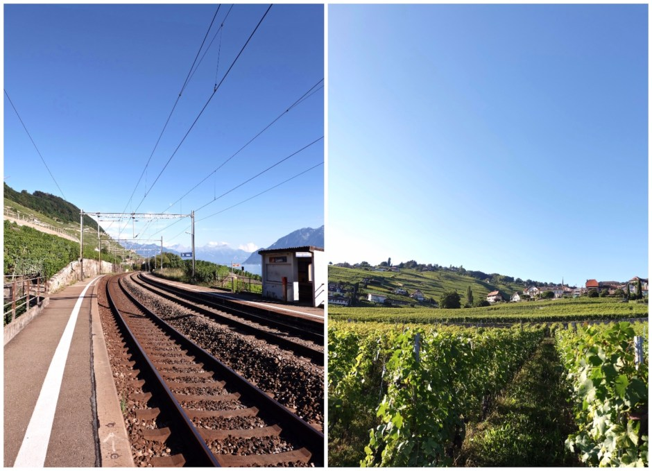 Train Track and Vineyard in Switzerland