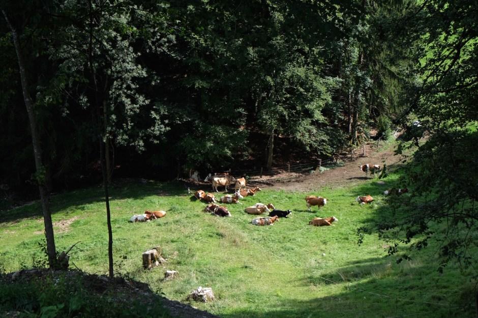 Morlon Switzerland