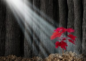 22986368 - great potential business metaphor with an old dark forest of tall trees and a young red leaf sapling emerging out of the ground as a symbol of future growth and hope for the future as an icon of investment growth and conservation of nature