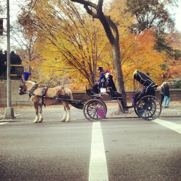 Carriage Ride with Purple Accents #newyork #photography #centralpark #fallactivities