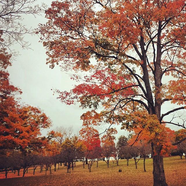 Autumn Color #connecticut #trees #colors