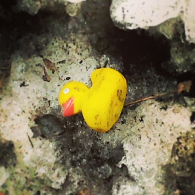 Sad #rubber #ducky in the dirty #snow #imdonewithwinter