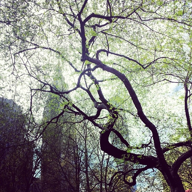 Madison Square Park in the spring #madisonsquarepark #nyc #spring #trees #mysterious