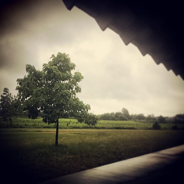 Tree, Southampton #art #museum #hamptons #longisland #newyork #landscape