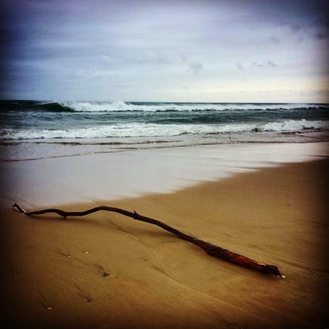 Driftwood #hamptons #longisland #seascape #surf #beach #sand