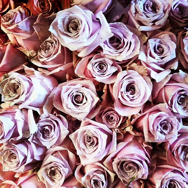 Real or fake ?  #roses #flowers #realorfake