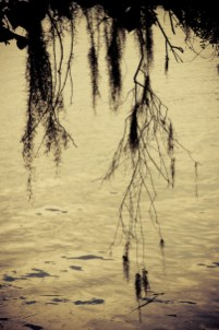 08-Landscapes-0108-MagnoliaPlantation