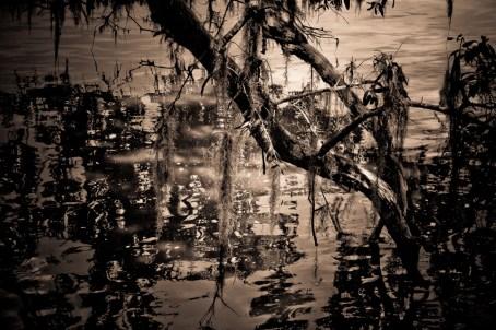 09-Landscapes-0166-MagnoliaPlantation