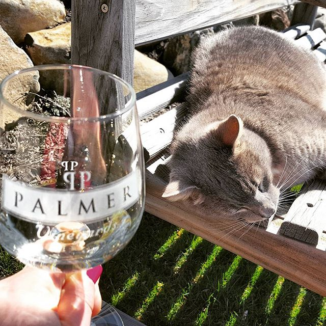 Albarino and Cat #vineyards #vineyardcat #cute #liwinecountry