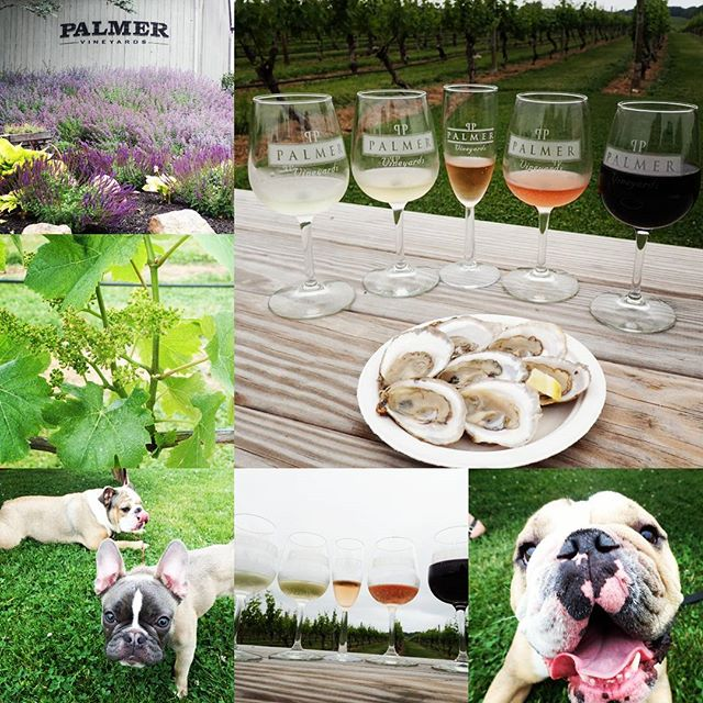 A Fun Day At The #Vineyard #nofo #longisland #hamptons #bulldogs #wine #palmervineyards #foodies