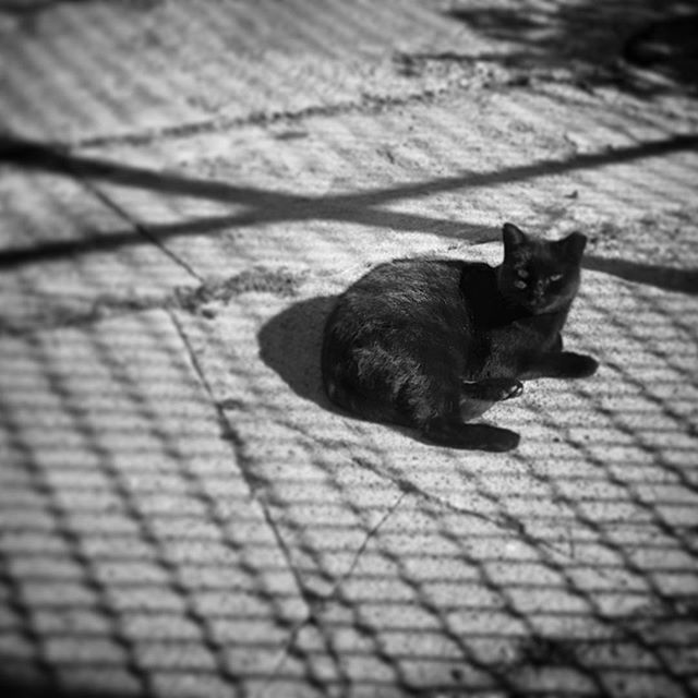 Little Black Cat #catsofinstagram #latergram #blackandwhite #halloween #halloweencat #kittycat #meow #blackcat