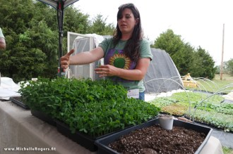 Jillian Mickens describes the process from seeds to harvest with these quick-growing greens.