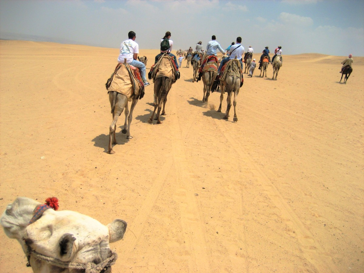 Riding a Camel Through Egypt Desert - Daily Travel Photo