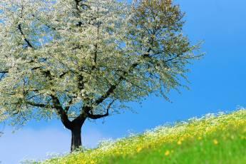 mp-tree-001-10