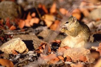 mp-mam-rodent-001-02